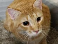 Hopi's story Hopi was one of 18 kittens living in a