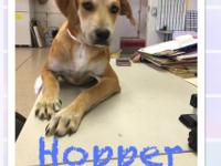 @HUGE ADOPTION EVENT WEDNESDAY, APRIL 18, 5 PM  - 9 PM