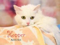 HOPPER's story Hello my name is Hopper! I am a gorgeous