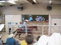 HORSE AUCTION: Saturday June 30 --Talpa Horse Auction