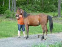 bay mare coming 2 year old will be 2 july 30. shown in
