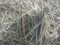 Excellent Quality High Elevation Horse Hay and Cow/Calf