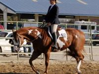 I will travel to any horse event to meet you or go to
