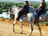 Great Horses Beautiful Trails Beginers Welcomed.