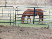 Have pen with run in barn. Turn out pasture, when