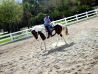 15 Acre Equestrian Center in west Orange County located
