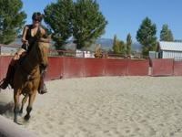 Horse Boarding family friendly facility in Minden NV.