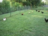 200 feet of fencing plus 30 6 foot T posts. $180