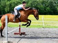 Shelby is a 7 year old up and coming OTTB with a lot of
