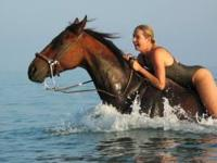 This horse is great for riding through the water. She