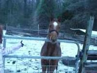 he is very good horse 20 months old. not tran but he