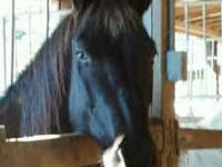 I have a Quarter horse for sale. She is 14 years old