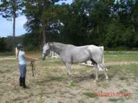 True force of nature, Is a 2005 registered Thoroughbred