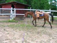 horse sale for sale in Texas Classifieds & Buy and Sell in Texas