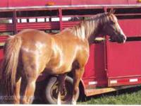 horse sale Classifieds - Buy & Sell horse sale across the USA page 4