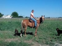 Horse ~ Livestock ~ Pet Supply ~ Barn Sale !! Lots of