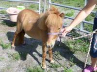Here is your chance to own a QUALITY miniature horse 2