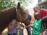 http://campbellfarms.webstarts.com/index.html * Horse