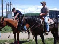 Nice tall reg QH gelding, 9 yrs old, dark bay color,