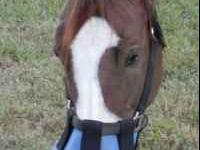 We have designed shades for horses with white faces to