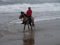 12 hand, 7 year old gelding. The girl riding him on the