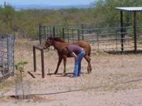 Professional horse training available. Will start
