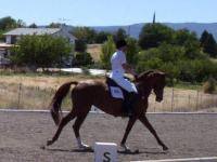 Beautiful Registered Thoroughbred Mare ? Older horse