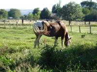 Shared pasture with 4 other horse for rent.  Off