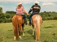 Groover Photography is searching for equines! Do you