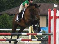 English Horseback Riding Lessons in Convenient