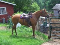 Owner Must Sell Horses Due to Health Issues. Various