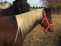 Sparrow is a standardbred gelding around 16 years old.