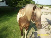 I have 3 good ridding horses, and some ponies too. I am