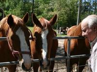 3 Horses for sale.....1 Quarter Horse(mare)...2