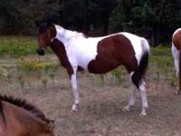 Horses for sale. Please send email or call . Location: