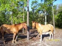 We have horses for sale. From good barrel racing