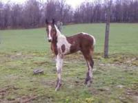 Have many horses, ponies and foals for sale. Have some
