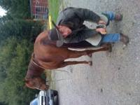 Professional farrier accepting new clients. Gentle
