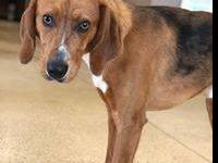 hortan is a 1 year old hound mix. he is super sweet and