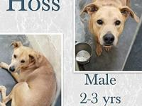 Hoss's story Hoss's foster mom is just starting to get