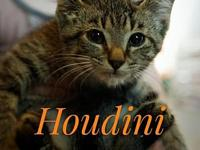 Houdini's story Some might call me a Momma's boy...and