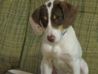 Hound - Alice - Medium - Young - Female - Dog Alice is