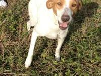 Hound - Alice - Medium - Young - Female - Dog Alice and