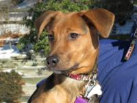 Hound - Angus - Medium - Baby - Male - Dog Hi Ya! I am