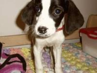 Hound - Aphrodite - Medium - Baby - Female - Dog My