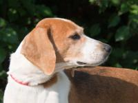 Hound - Baby - Large - Adult - Female - Dog They named
