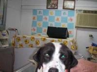 Hound - Becca - Medium - Adult - Female - Dog Becca