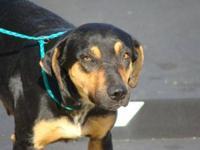 Hound - Benjamin - Large - Adult - Male - Dog Benjamin