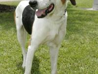Hound - Bri - Medium - Adult - Male - Dog To learn more