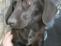 Hound - Buttercup - Large - Young - Female - Dog This